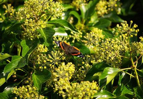 FOTKA - motylek obedva
