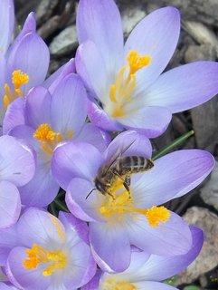 FOTKA - první včelka.