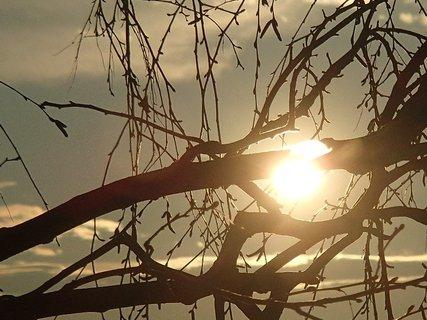 FOTKA - západ slnka 09.03.2013-slnko obopína konár