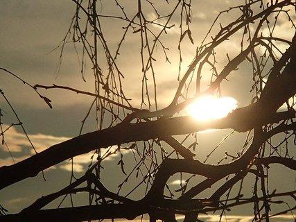 FOTKA - západ slnka 09.03.2013-slnko za konárom