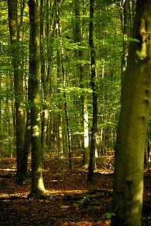 FOTKA - v lese,.