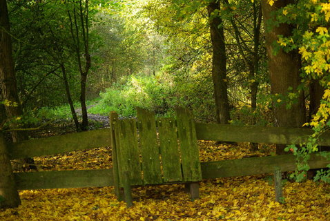 FOTKA - vratka do lesa