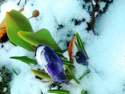 FOTKA - pod sněhem.