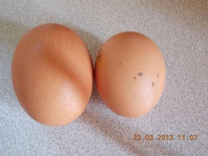 FOTKA - 22.3 - 23.3 - 9 - vejce a vejce, veliké dvoužloutkové a malé