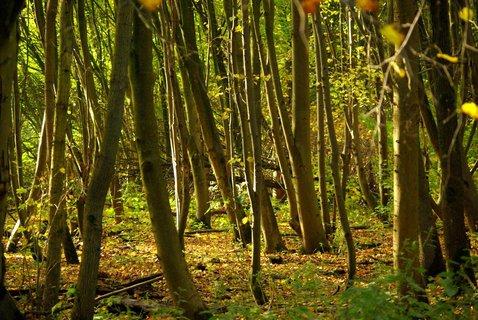 FOTKA - samy strom