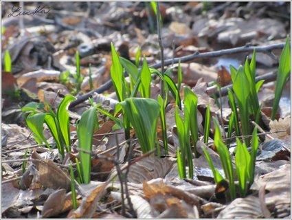 FOTKA - Zelená naděje, že jaro přijde... A zas nic