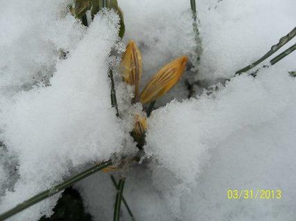 FOTKA - 31.3 na zahradě