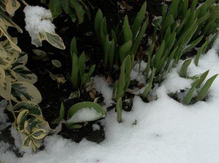 FOTKA - 31.3.2013 na zahradě