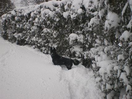 FOTKA - Nadílka sněhu za dva dny 2
