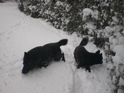 FOTKA - Nadílka sněhu za dva dny 3