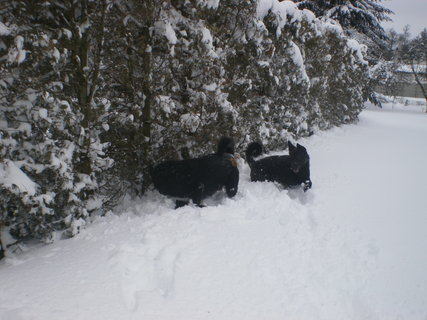 FOTKA - Nadílka sněhu za dva dny 4
