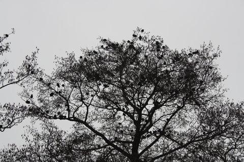 FOTKA - *ptáci*