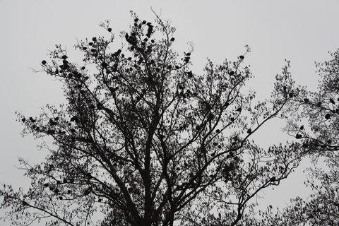 FOTKA - .ptáci .