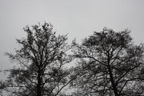 FOTKA - -ptáci-