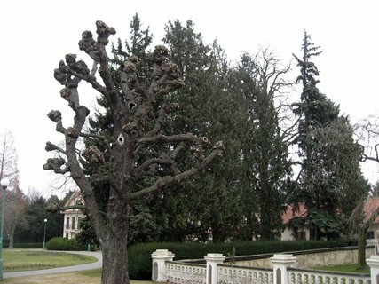 FOTKA - Královská zahrada v dubnu 3