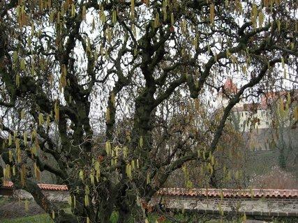 FOTKA - Královská zahrada v dubnu 28