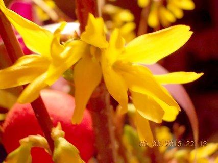 FOTKA - 30.3. - 31.3. - 2 - Velikonoční poezie