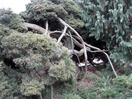 FOTKA - Královská zahrada v dubnu 68