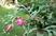 vánoční kaktus v červnu