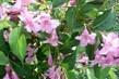 detaily  květů