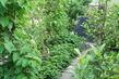 moje zahrada,.,.,.,.