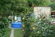 kousek z mé růžové zahrady