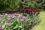 Tulipány - dendrologická zahrada