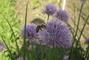 Včelky na pažitce