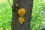 houba