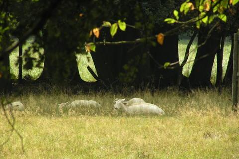 FOTKA - Zámek Častolovice- bílí jeleni