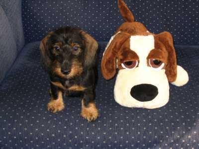 FOTKA - pes s plyšákem