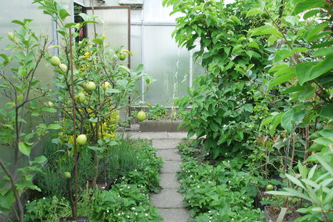 FOTKA - moje zahrada,.,.,.