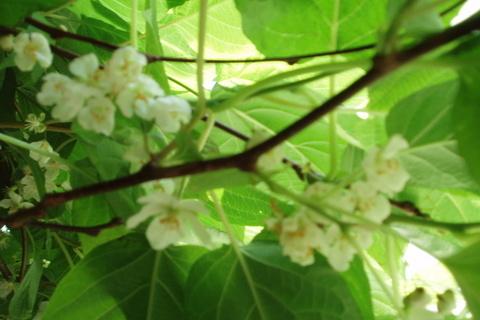 FOTKA - moje zahrada,.,.,.,.,.,.,.