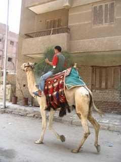 FOTKA - velbloud s egypťanem
