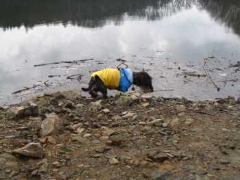 FOTKA - Ben na přehradě