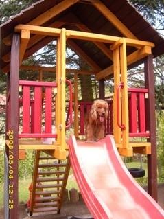 FOTKA - někdo chodí se psem na cvičák.....