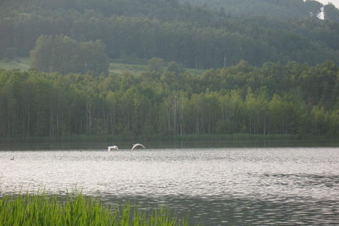 FOTKA - labuťe
