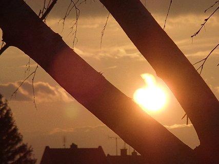 FOTKA - 20.03.2013-slnko medzi konármi