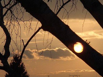 FOTKA - slnko v konári, či očný klam?