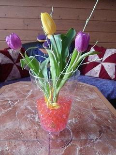 FOTKA - tulipány od švagrové