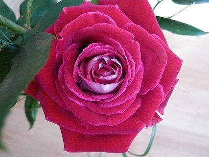 FOTKA - ruže od švagrové k narozeninám