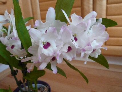 FOTKA - orchidej...