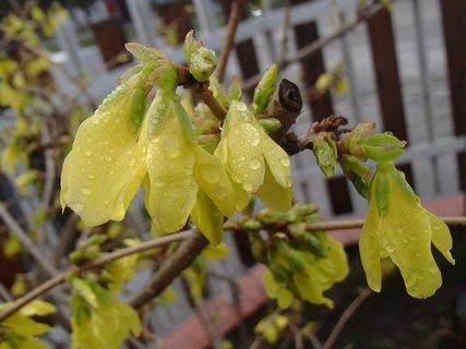 FOTKA - zlatý dážď