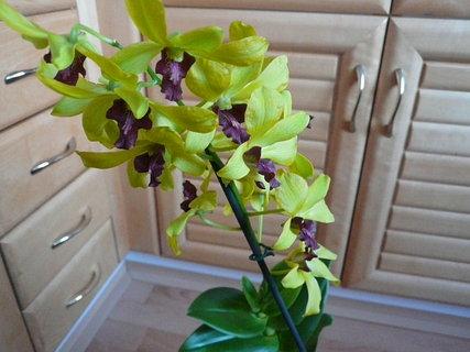 FOTKA - orchidej od mamky k narozeninám,