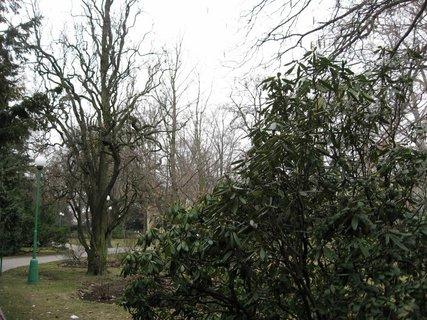 FOTKA - V Královské  zahradě 18