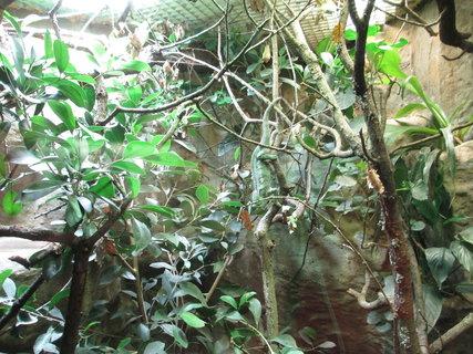 FOTKA - zvířátka v pavilonech za sklem...12