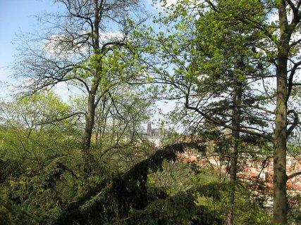 FOTKA - Jaro na Petříně 16