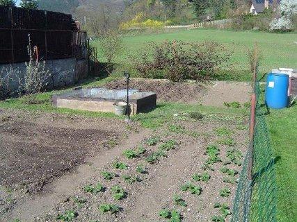 FOTKA - nové jahodníky rostou