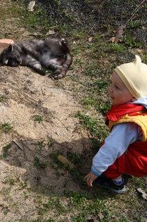 FOTKA - Kuba+kočka
