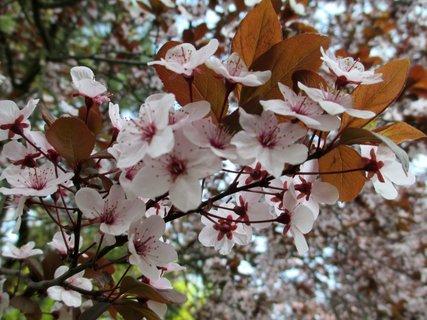 FOTKA - květy stromů